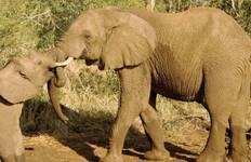 Kenya Safari Experience Tour