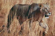 Culture and Wildlife of Tanzania Tour