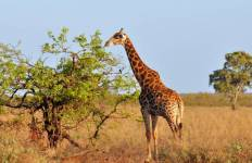 Great African Expedition - 57 days Tour