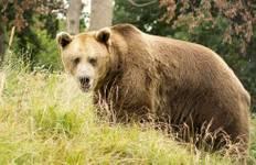 Animal Encounters in Romania Tour
