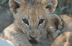 Botswana & Zimbabwe Lodge Safari Tour