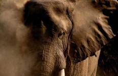 South Luangwa Walking Safari - Premium Tour