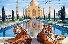 Golden Triangle India Tour with Udaipur & Wildlife Safari Tour