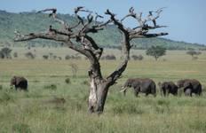 Tanzania: The Serengeti & Beyond with Selous Tour