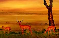Jewels of Africa with Nairobi, Lake Nakuru National Park Area & Kruger National Park Area Tour