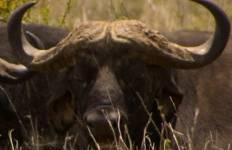 East Africa Private Safari with Selous Game Reserve & Zanzibar - Beach Tour