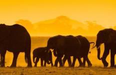 Kenya Private Safari with Nairobi, Amboseli National Park Area & Samburu National Reserve Area Tour