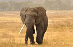Tanzania Private Safari with Selous Game Reserve & Zanzibar - Beach Tour