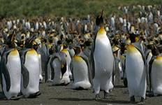 Crossing the Circle via Falklands & South Georgia (Sea Adventurer) Tour