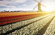 Tulips of Northern Holland Tour