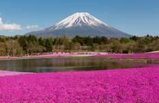 Once in a life-time experience - Fuji Shibazakura Festival Tour Tour