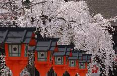 Japan Cherry Blossom Tour - Essence of Spring (from Osaka to Tokyo) Tour
