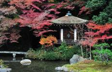 Wonders of Winter Japan Tour