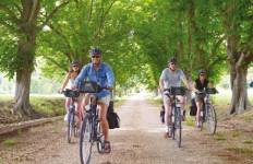 Provence Alpilles by Bike Tour