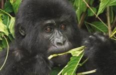 Uganda Gorilla Fly In Safari Tour