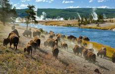 Yellowstone Wildlife Trails (hotel) Tour