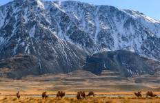 Gobi to Golden Eagle Tour Tour