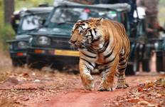 Jaipur City Tour with Tiger Tour