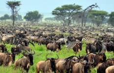 Kenya & Tanzania Trails - 13 days (from Nairobi to Kilimanjaro International Airport) Tour