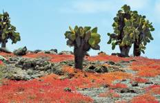 Peru Adventure & Galapagos Cruise (from Guayaquil to Lima) Tour