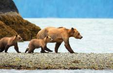 Ultimate Canadian Wilderness and Alaska Inside Passage (from Victoria to Vancouver) Tour