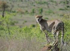 Johannesburg, Kruger & Durban Air-Expedition Tour