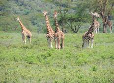 Africa East & South between Nairobi and Nairobi with Kilimanjaro Tour