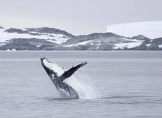 Fly & Cruise – Epic Antarctica Tour