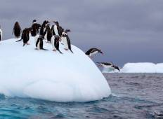 Fly & Cruise - Falkland Islands, South Georgia & Antarctica Tour