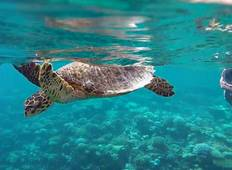 Marine Wildlife of the Maldives Tour