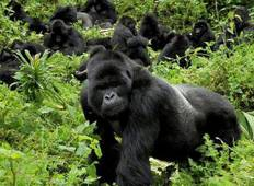 7 Day Gorilla Trekking And Wildlife Viewing Safari In Uganda Tour
