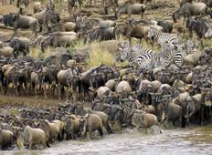 East Africa Migration Safari: Limited Edition Tour