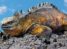 7 Day Galapagos Budget Island Hopping Tour