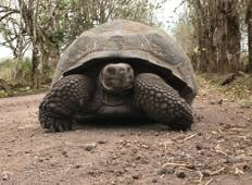 12 Day Galapagos Expedition (Tourist Class) Tour