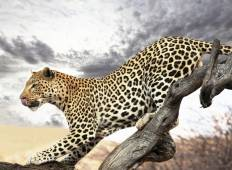 Wild Kingdoms Safari (from Johannesburg to Durban) Tour