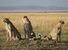 Kenya Safari Experience - Independent Tour