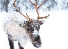 Finnish Lapland in Winter Tour