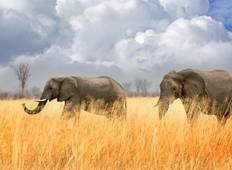 Safari tour: Full 3-day game drive in Tarangire, Lake Manyara, Ngorongoro Crater Tour