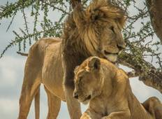 Wildlife Parks of Tanzania Tour