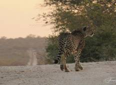 Ruaha Revealed-Photographic Safari Tanzania Tour