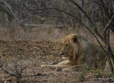 Lower Zambezi – Accompanied Photographic Safari Tour