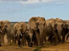 Addo Elephant Safari Tour
