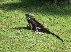 Essential Costa Rica - Package with Guanacaste Tour