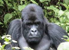 Gorilla Trek & Tanzania Northbound - 25 days Tour