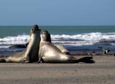 Puerto Madryn - 2 nights Tour