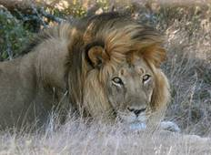 4 Day Cape to Addo Safari Tour (Return) Tour