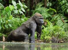 Republic of Congo Expedition - Gorilla Trek  Tour