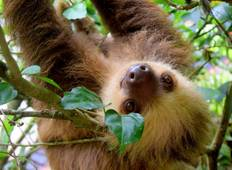 Costa Rica – Wildlife Safari Tour