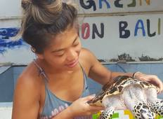 Indonesia - 2 weeks Volunteer - Bali Sea Turtle Rescue Tour