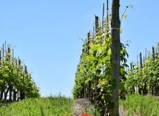 Headwater - Gastronomic Barolo Walk Tour